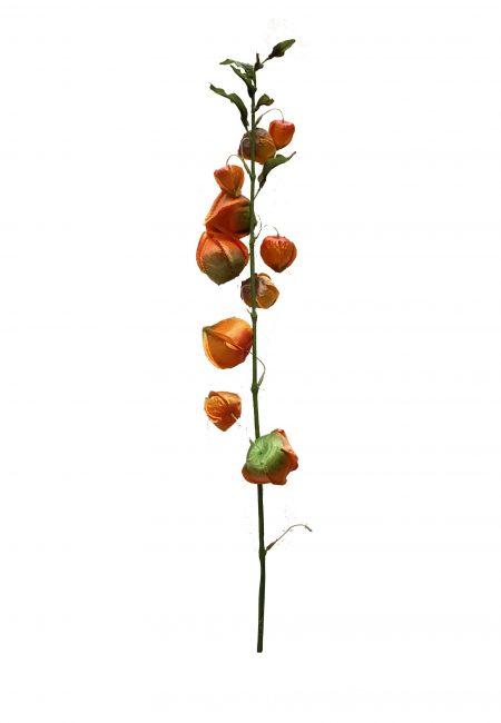 Physalis Lampionnen kunstbloem